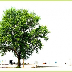 Ritratto-di-un-albero-in-hi